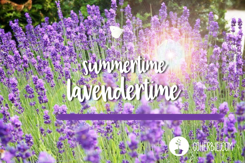 Summertime = lavendertime // 9 recipes with lavender