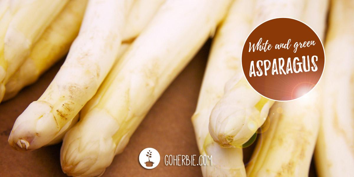 Asparagus – the white gold
