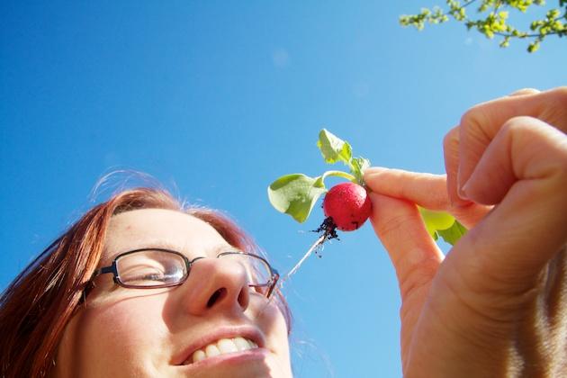 Elke Radish harvest