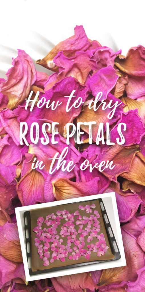 How to dry rose petals in the oven?