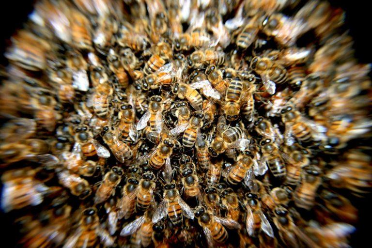 bee population honey