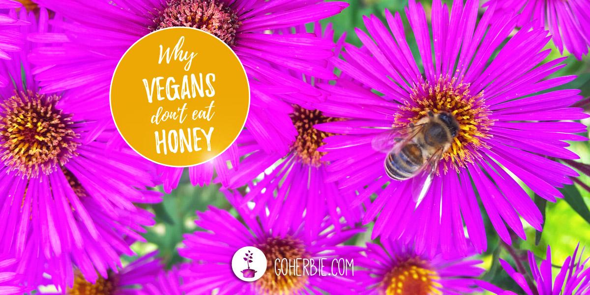Why don't vegans eat honey? – Is honey vegan?