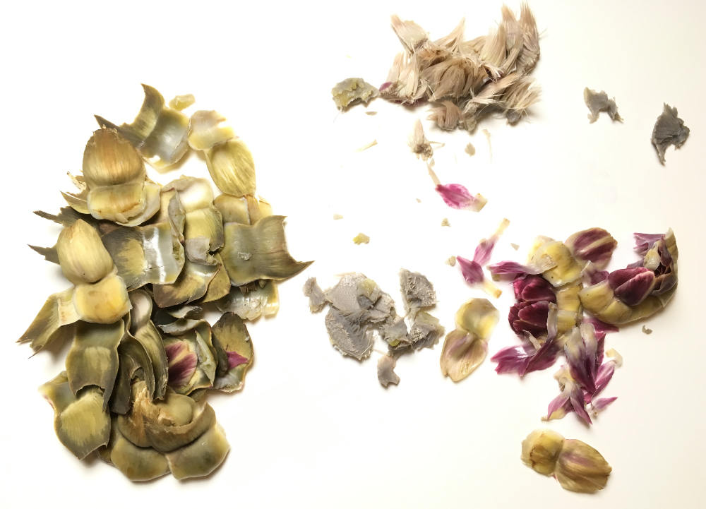 parts of an artichoke