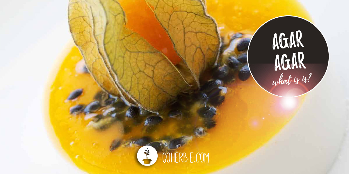 Agar agar: all you need and want to know about it