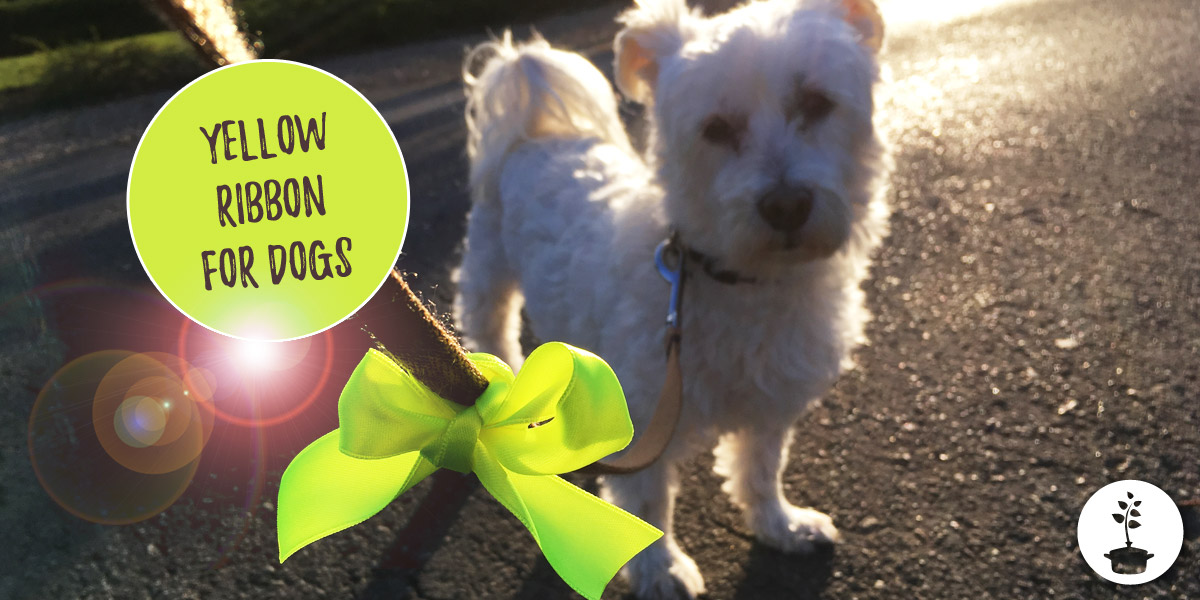 Yellow ribbon on a dog leash – what does it mean?