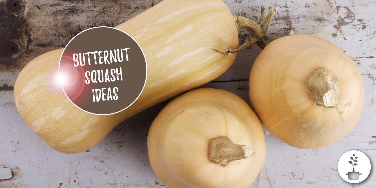 What to do with butternut squash? 7 ideas